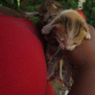 Project Save The Kittens