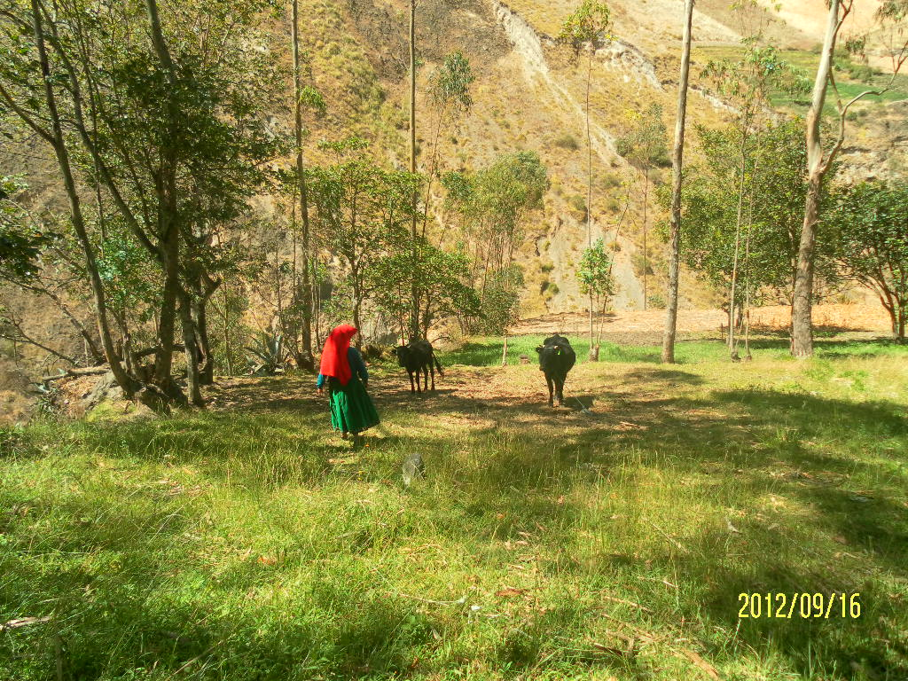 Single Parenthood in the Andean Mountains