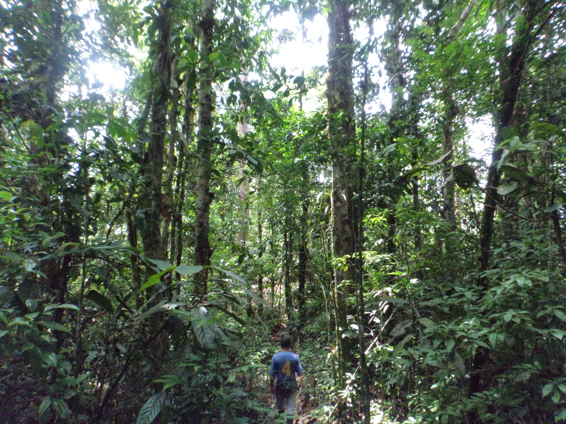 Napo, Where the Andes Meet the Amazon