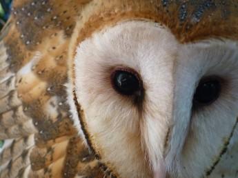 R3 Animal: Playing With Owls