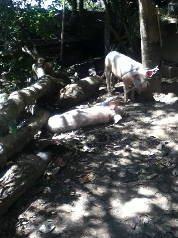 Never Make Friends with the Pigs: 21 Things I've Learned from Living in Ecuador