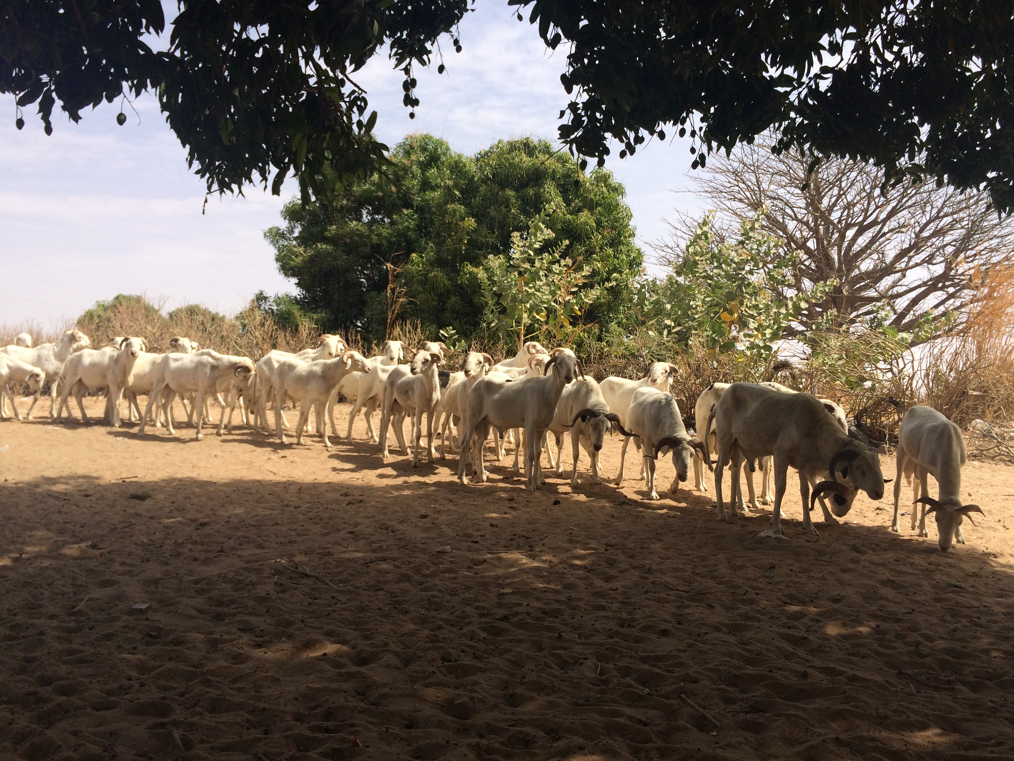 7 'THINGS' I'LL MISS ABOUT SENEGAL