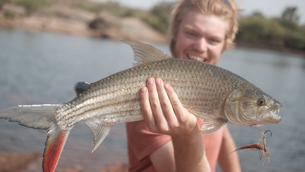 Crocodiles, Tigerfish, a Redhead, and to Much Dust